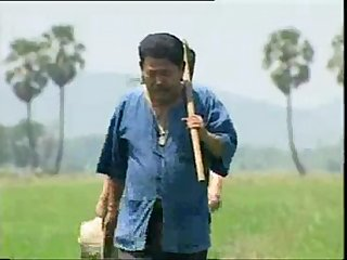 Thai yed clip513